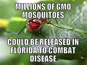 gmmosquito1-25-15