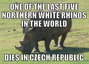 rhino7-29-15