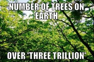 trees9-2-15